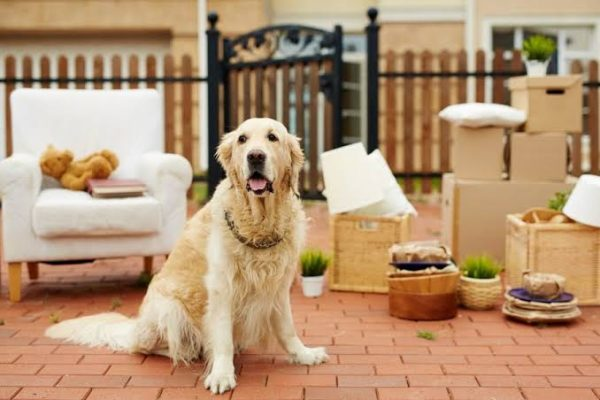 tips for renting with pet